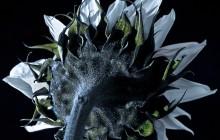 Moon Flower Back